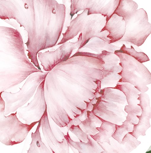 Close up of Watercolour Peony Wall Sticker